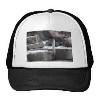 Ermine On Snowy Rocks Mesh Hat