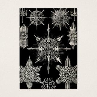Ernst Haeckel   Acanthophracta Business Card