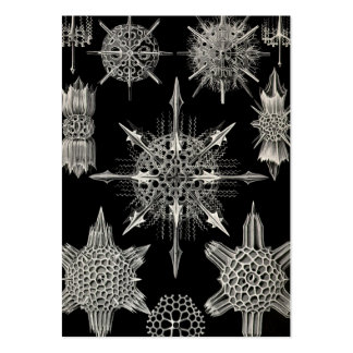 Ernst Haeckel | Acanthophracta Pack Of Chubby Business Cards