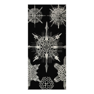 Ernst Haeckel | Acanthophracta Personalized Rack Card