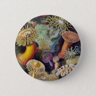 Ernst Haeckel - Actiniae 6 Cm Round Badge