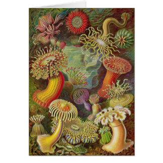 Ernst Haeckel - Actiniae Anemones Card