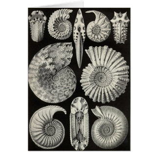 Ernst Haeckel - Ammonitida Card