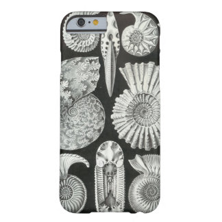 Ernst Haeckel - Ammonitida Barely There iPhone 6 Case