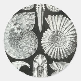 Ernst Haeckel - Ammonitida Classic Round Sticker