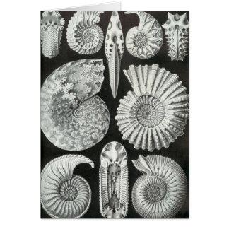 Ernst Haeckel - Ammonitida Greeting Card