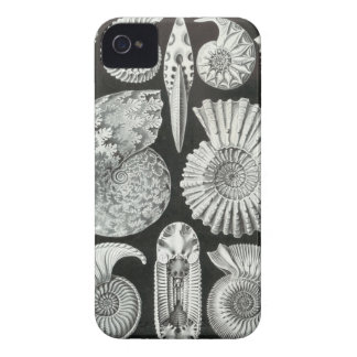 Ernst Haeckel - Ammonitida iPhone 4 Cover