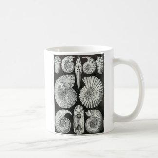 Ernst Haeckel - Ammonitida Mugs