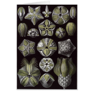 Ernst Haeckel Art Card: Blastoidea Card