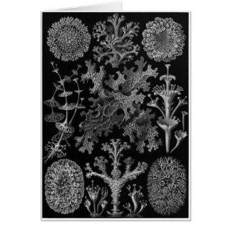 Ernst Haeckel Art Card: Lichenes Card