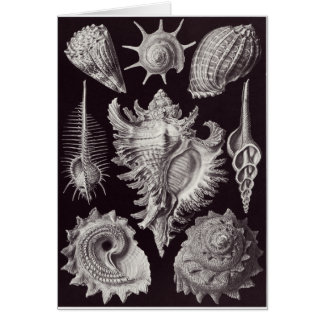 Ernst Haeckel Art Card: Prosobranchia Card