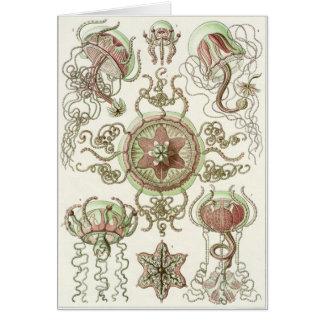 Ernst Haeckel Art Card Trachomedusae
