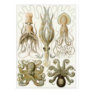 Ernst Haeckel Art Postcard: Gamochonia Postcard