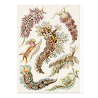 Ernst Haeckel Art Postcard: Nudibranchia Postcard