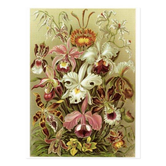 Ernst Haeckel Art Postcard: Orchidae Postcard