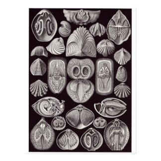 Ernst Haeckel Art Postcard: Spirobranchia Postcard