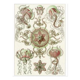 Ernst Haeckel Art Postcard Trachomedusae
