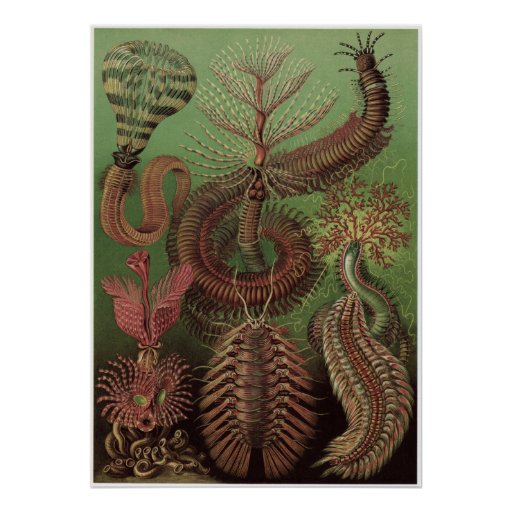 Ernst Haeckel Art Print: Chaetopoda Poster