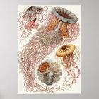 Ernst Haeckel Art Print: Discomedusae Poster