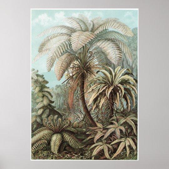 Ernst Haeckel Art Print: Filicinae Poster