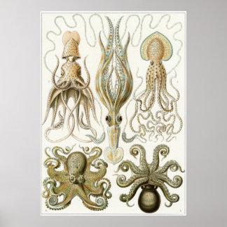 Ernst Haeckel Art Print: Gamochonia Poster
