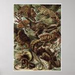 Ernst Haeckel Art Print: Lacertilia Poster