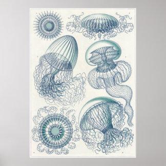 Ernst Haeckel Art Print Leptomedusae