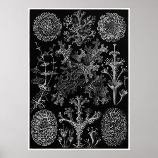 Ernst Haeckel Art Print: Lichenes Poster