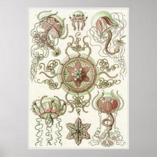 Ernst Haeckel Art Print Trachomedusae