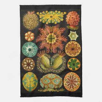 Ernst Haeckel Ascidiae Sea Life Illustration Tea Towel