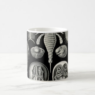 Ernst Haeckel Aspidonia Basic White Mug