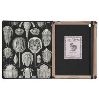 Ernst Haeckel Aspidonia iPad Case