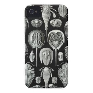 Ernst Haeckel - Aspidonia iPhone 4 Cover