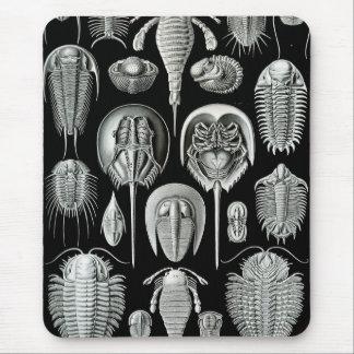 Ernst Haeckel - Aspidonia Mouse Mat