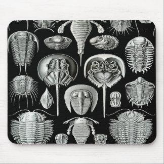 Ernst Haeckel - Aspidonia Mousepads