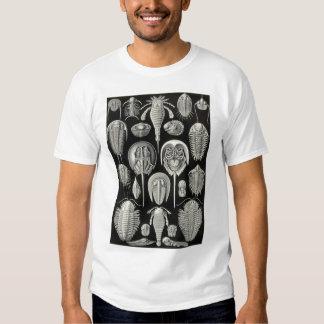 Ernst Haeckel - Aspidonia Shirts