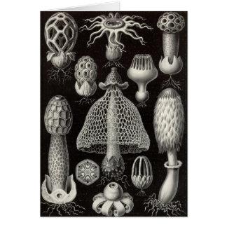 Ernst Haeckel - Basimycetes Mushrooms Card