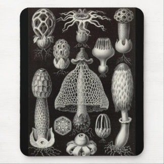 Ernst Haeckel - Basimycetes Mushrooms Mouse Mat