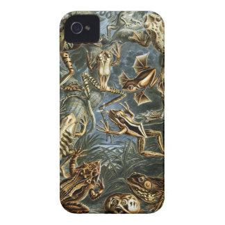 Ernst Haeckel - Batrachia iPhone 4 Cover