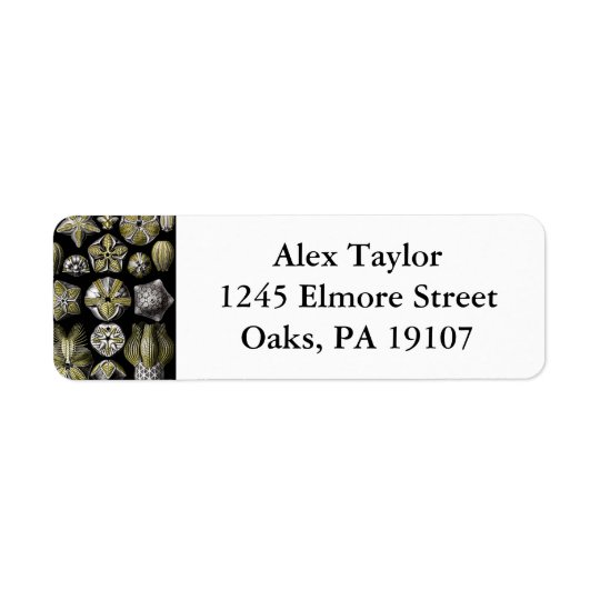 Ernst Haeckel Blastoidea Return Address Label