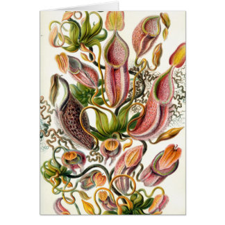 ernst haeckel botanical art card