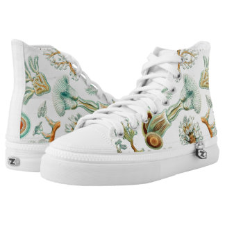 Ernst Haeckel Bryozoa Shoes
