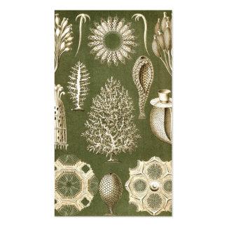 Ernst Haeckel Calcispongiae Standard Business Cards