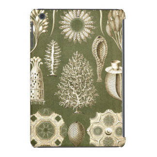Ernst Haeckel Calcispongiae iPad Mini Retina Case