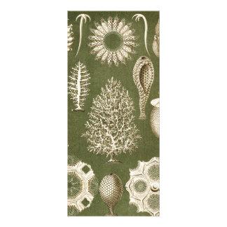 Ernst Haeckel Calcispongiae Customized Rack Card
