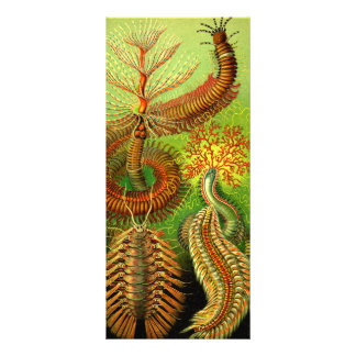 Ernst Haeckel Chaetopoda Custom Rack Card