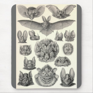 Ernst Haeckel - Chiroptera Bats Mouse Pad