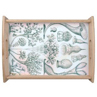 Ernst Haeckel Ciliata Serving Tray
