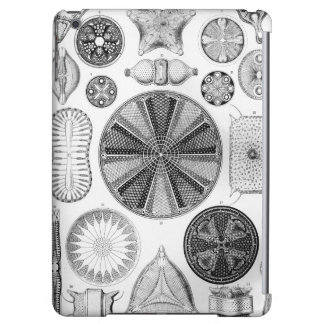 Ernst Haeckel Diatomea