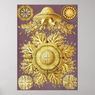 Ernst Haeckel - Discomedusae3 Poster